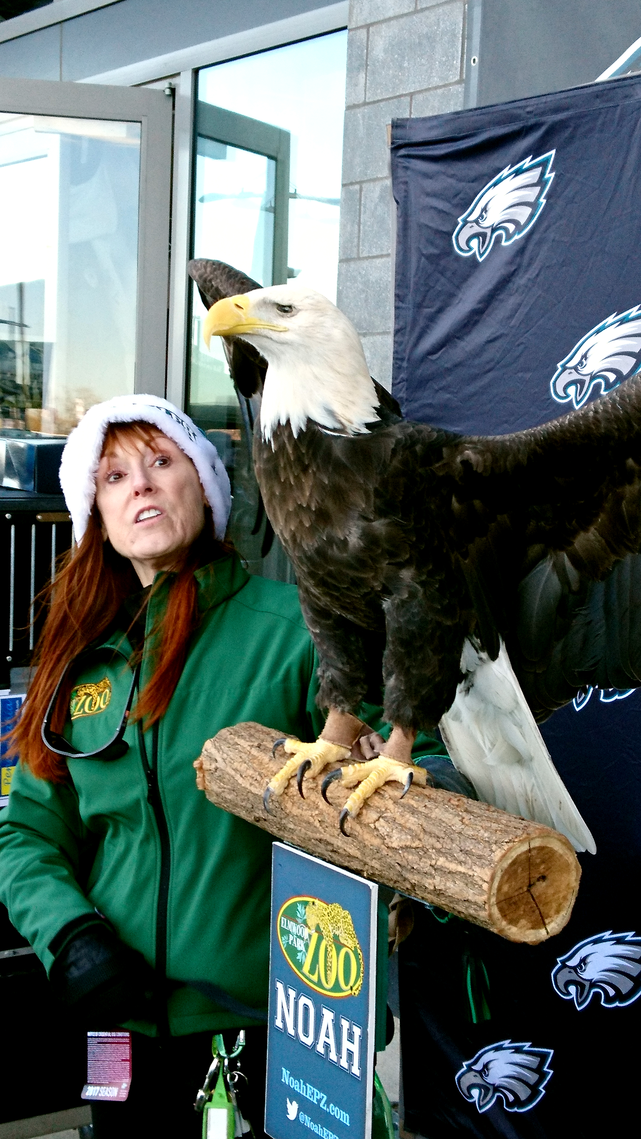 Bald headed eagle utanför Lincoln Financial Field. Foto: John Andersson.
